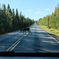 189_1_Lappland_009